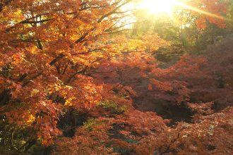 サクッと楽しむ紅葉狩り! 都会のオアシス・等々力渓谷へ。