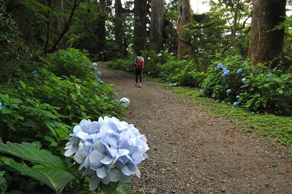 【2日目】東海道最大の難所「箱根峠」を 上って上って上り切る!